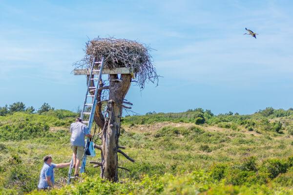 Opération de baguage de cigognes au Mont Saint-frieux