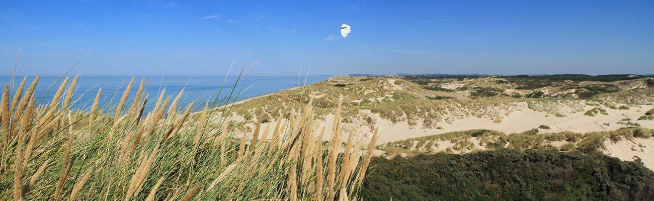 Dunes de Berck