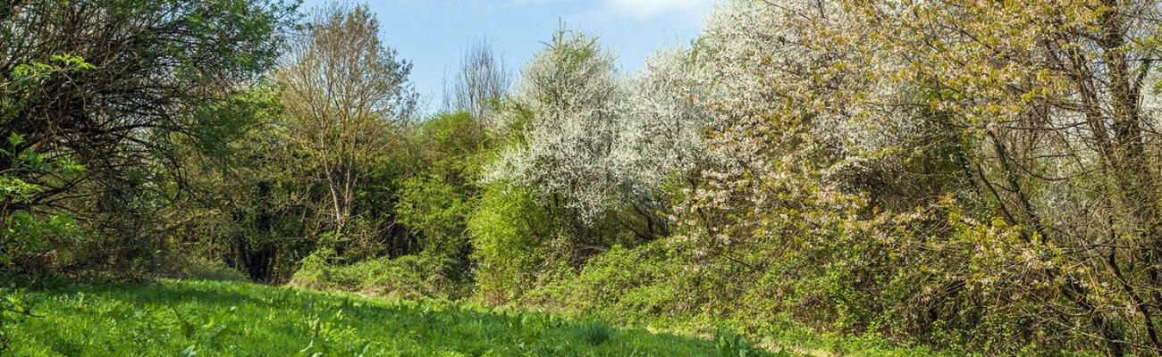 Bois des bruyères