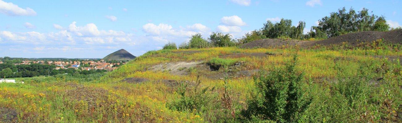 Terril du marais de Fouquières