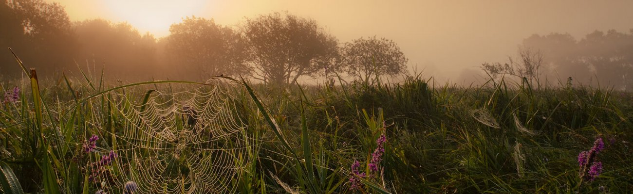 Marais de Guînes