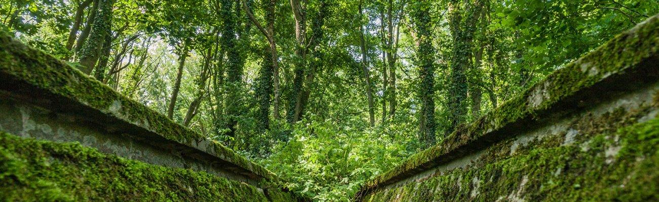 Bois d'Haringzelles