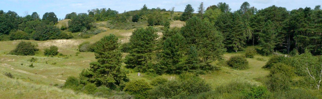 Dunes du Mont Saint-Frieux